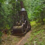 Going Deep And Weird In The Post‐Industrial Forest